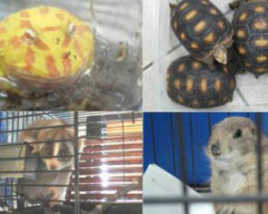 32 animals found in flat; man fined $41,000