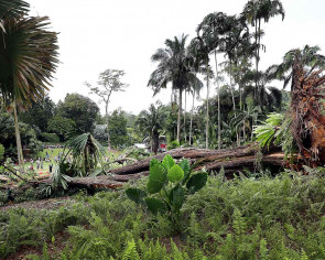 Botanic Gardens tragedy: 'Not likely' tree fell owing to lack of space