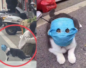 Mask-wearing cat becomes internet star during coronavirus outbreak