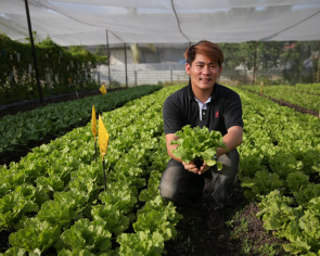 Local standard for organic food in works