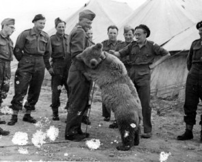 Animated film to spotlight bear that served in WWII
