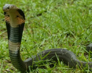 China coronavirus may have come from a snake, researchers say