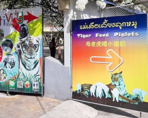 Thai zoo cancels controversial 'Tiger Feed Piglets' show