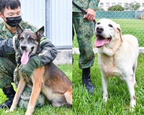 Give these dogs who ORD from SAF a loving home, HDB flats also okay