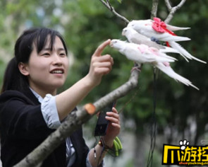Chinese woman sells bird diapers, earns $6,000 a month