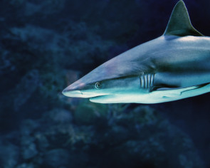 Shark bites child in US, third in a month in same state