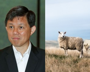 Chan Chun Sing laughs at his verbal slip after netizens point out that cotton does not come from sheep