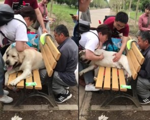 Former police dog in China gets stuck in a park bench due to retirement weight gain