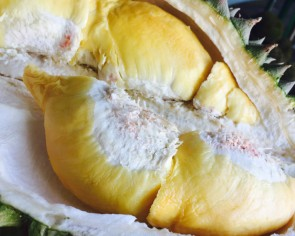 Johor durian seller can't part with giant 12kg fruit