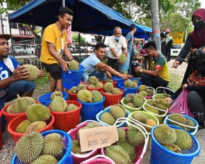 Bumper harvest sees dirt cheap kampung durians in Malaysia