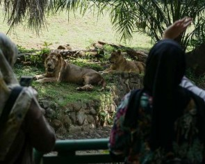 Indonesia's oldest zoo reopens with social distancing restrictions