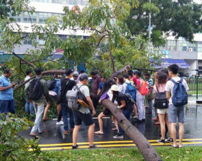Passers-by exhibit 'kampung spirit', work together to remove tree that fell along Kaki Bukit