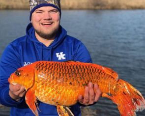 Man in US catches massive 'goldfish' with just a biscuit - then sets it free