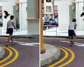 Crows around fallen fledgling attack passers-by in Toa Payoh
