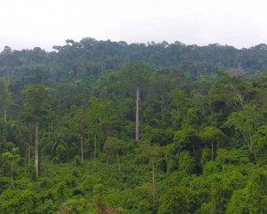 Paying countries not to chop down forests works, study shows