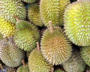 North Sumatra durian penetrates global market in the form of delicious ice cream