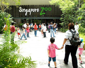 Singapore Zoo to get makeover: 5 fun facts about the zoo and how it has transformed