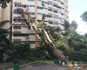 Residents thought it was an earthquake when tree fell on Pearl Bank condo