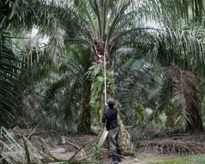 Malaysia's palm producers to recruit prisoners and ex-drug addicts to solve coronavirus-driven labour crunch