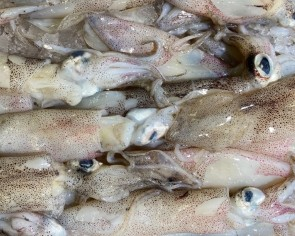 Coronavirus found on imported squid packaging in China