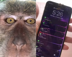 Johor man finds selfies of monkey 'thief' on lost iPhone