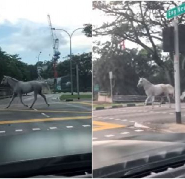 Horse on the loose was just trying to find its way home, says owner