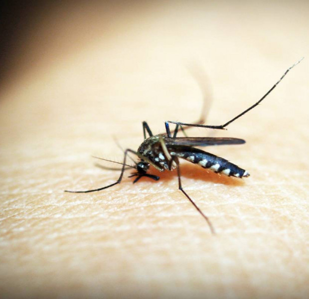 Can novel coronavirus be transmitted via mosquitoes?