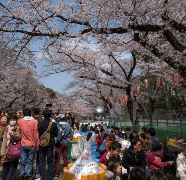 Japan cherry blossom festivals cancelled as coronavirus fears grow