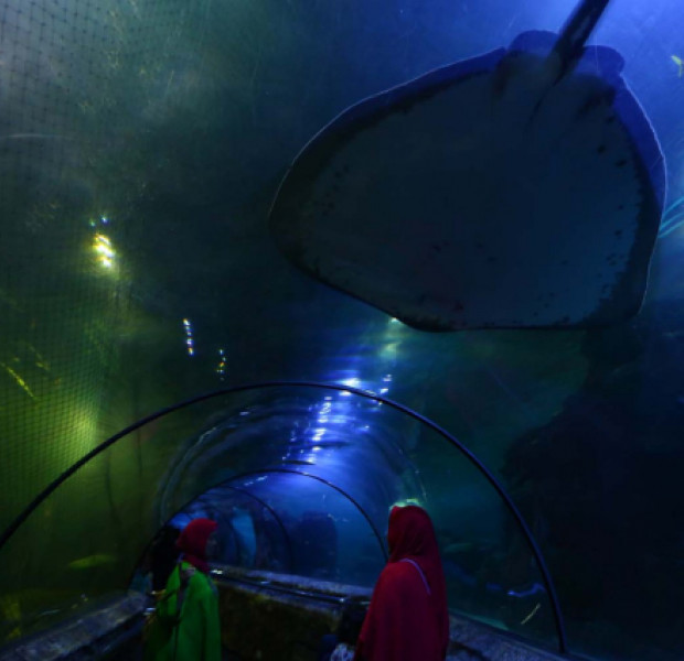 Stay the night at Sea World Jakarta with 'Camping Under the Sea'