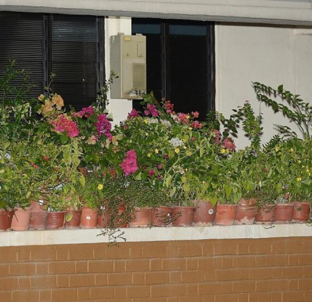 Jurong West resident takes down potted plants from ledge