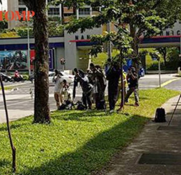 Crowd allegedly gathers around tree in Ang Mo Kio every morning for bird sighting