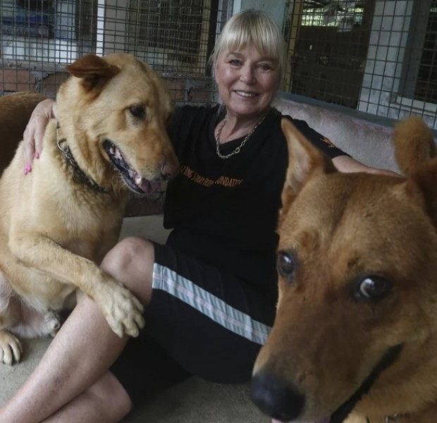 'It's heartbreaking': Hong Kong dog shelters may not survive pandemic
