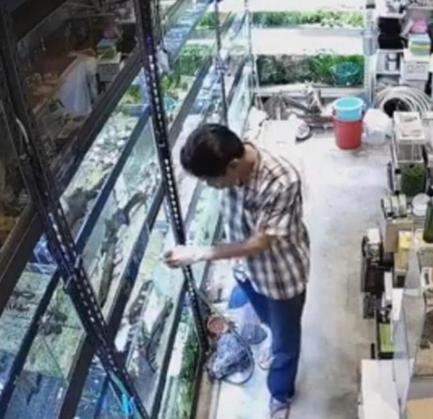 Customer allegedly poisons aquarium fish