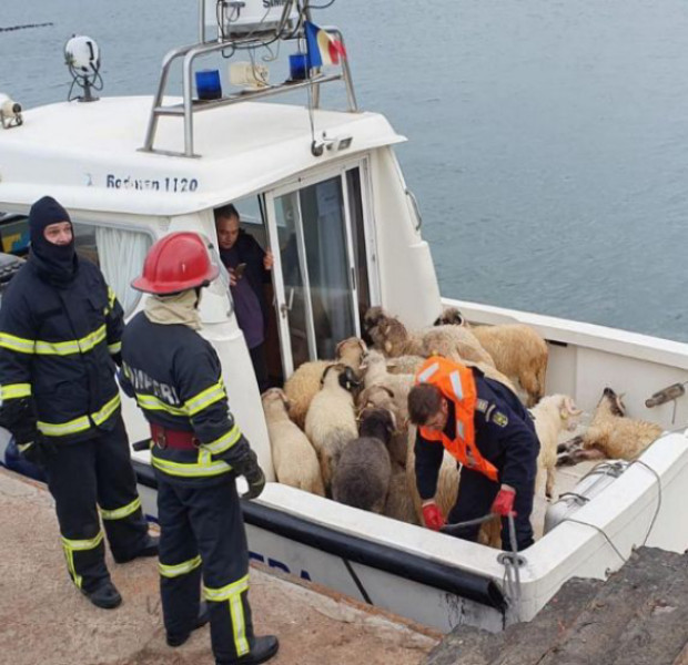 Ship with 14,600 sheep aboard capsizes off Romania