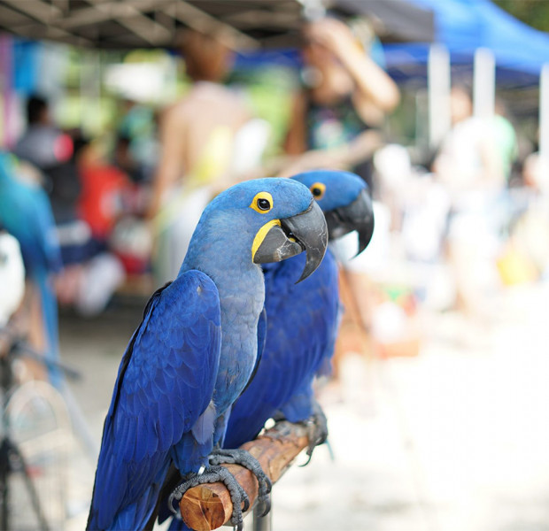 Weekend planner Oct 19-20: Free Scoot tickets at The Yellow Converter, annual parrot gathering & other fun activities