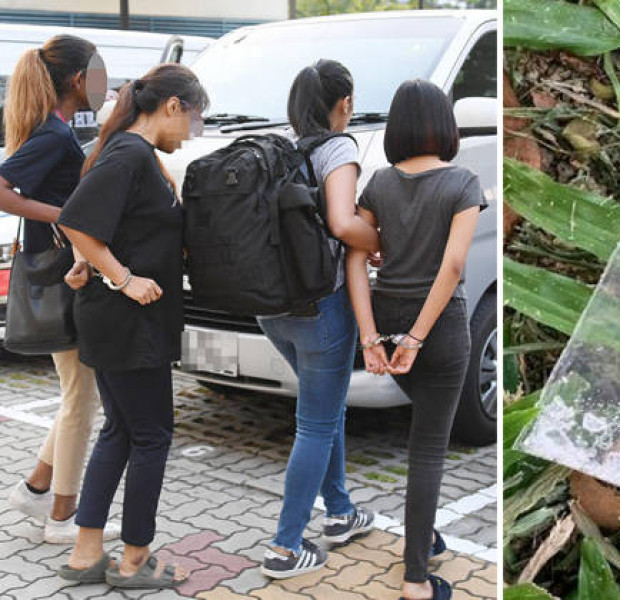 159 suspected drug offenders arrested in 12-day CNB blitz, including 13-year-old