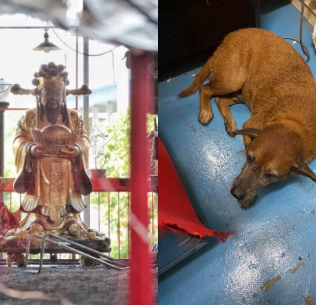 3 dogs found dead in Sembawang God of Wealth Temple fire