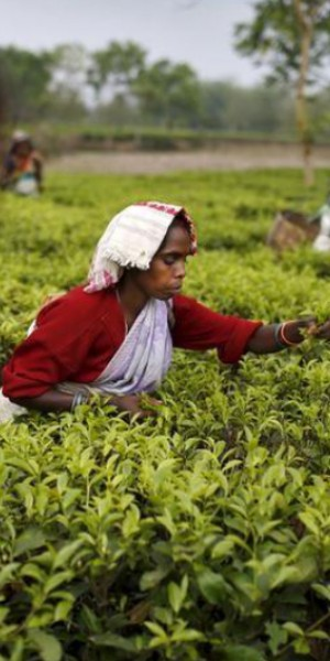 Coronavirus brews trouble for tea, disrupts supply as demand spikes