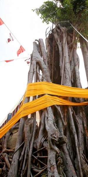 Fallen Toa Payoh's 'god tree' is now up again
