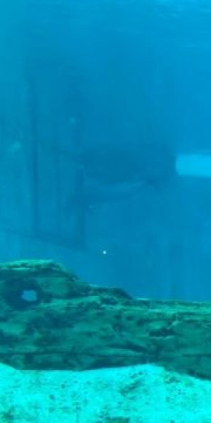 Video of dolphin ramming head repeatedly against tank wall purportedly taken at S.E.A. Aquarium in 2018