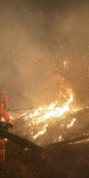 19 killed in massive forest fire in south-west China