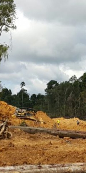 Missing timber contractor found dead in Sarawak jungle