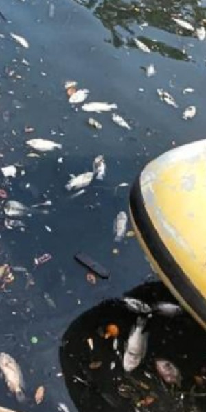 Hundreds of fish found dead in Melaka River pollution, partly caused by industrial discharge