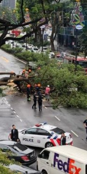Tree falls on car at Scotts Road in front of Grand Hyatt hotel