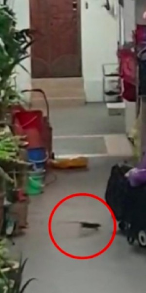 Rat-infested HDB unit in Clementi has neighbours living in fear