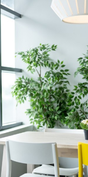 Green up your home with these awesome indoor plants