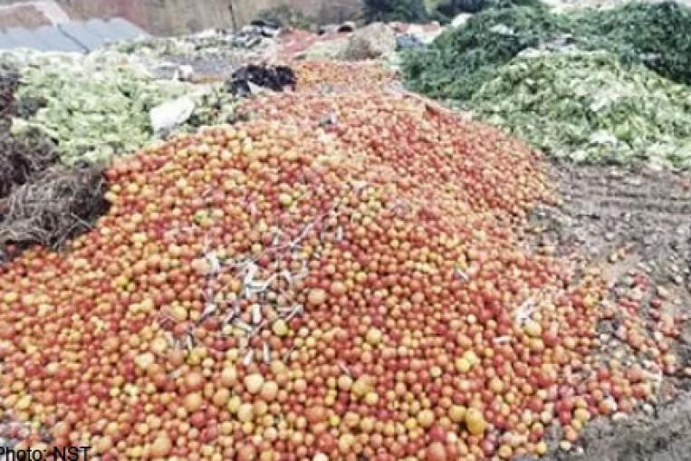 Cameron's tomato glut, Food News - AsiaOne