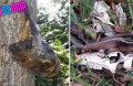 Shocking remains of animals apparently eaten at Tampines quarry