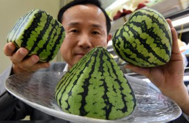 $140 square watermelon doesn't taste good