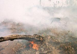 Number of hotspots in Sumatra down